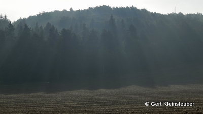 der Nebel steigt aus dem Wald auf