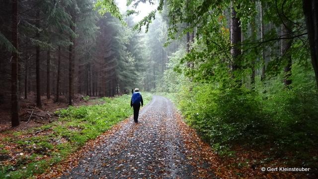 im Freiberger Stadtwald