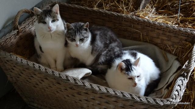 die müden Katzen von Oberlauterbach