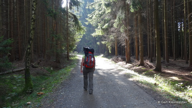 der Wald hinter Lottengrün