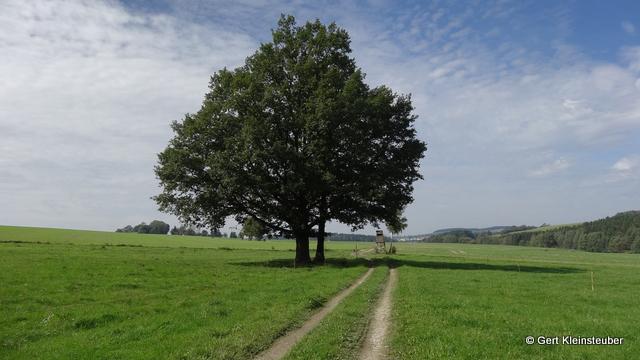 Weg vor Hartmannsgrün