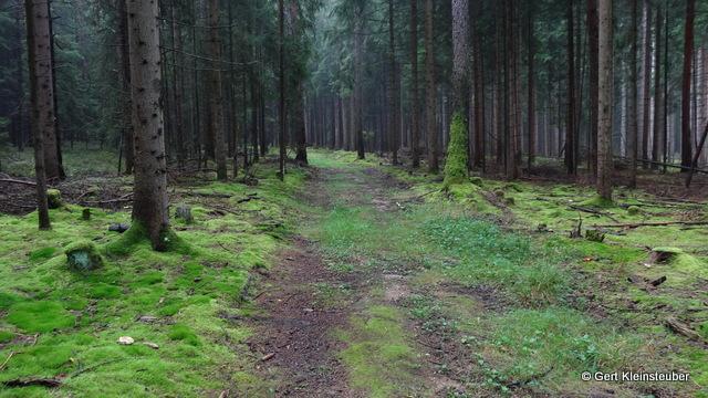 der Wald vor Triebel
