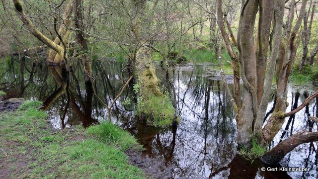 Sumpf im Mugdock Country Park