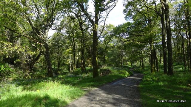 der obere Weg am Loch Lomond entlang