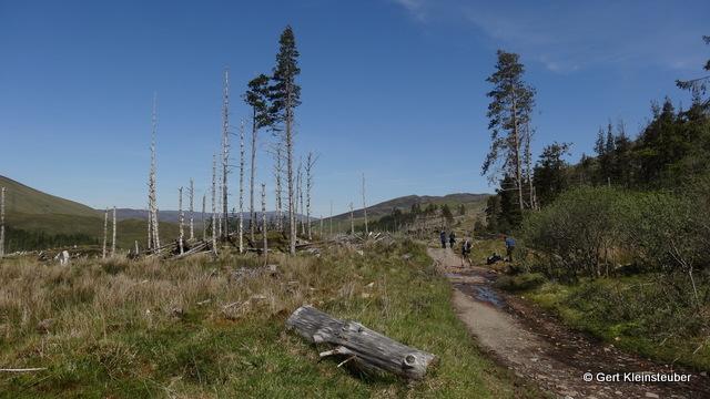 die traurigen Reste eines Waldes