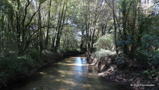 der Rio Louro